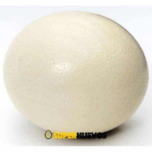 comprar huevo avestruz