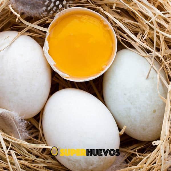 huevos de pata