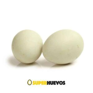 huevos pata