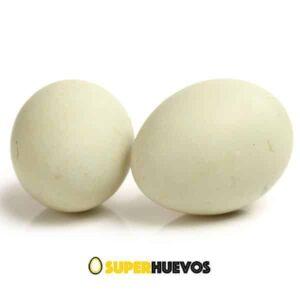 huevos pato xl